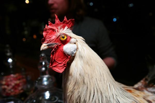 la conciergerie gastronomique lea ben zimra restaurant dégustation gastronomie expérience découverte paris poulet volaille de qualité soyles photo by United states of paris