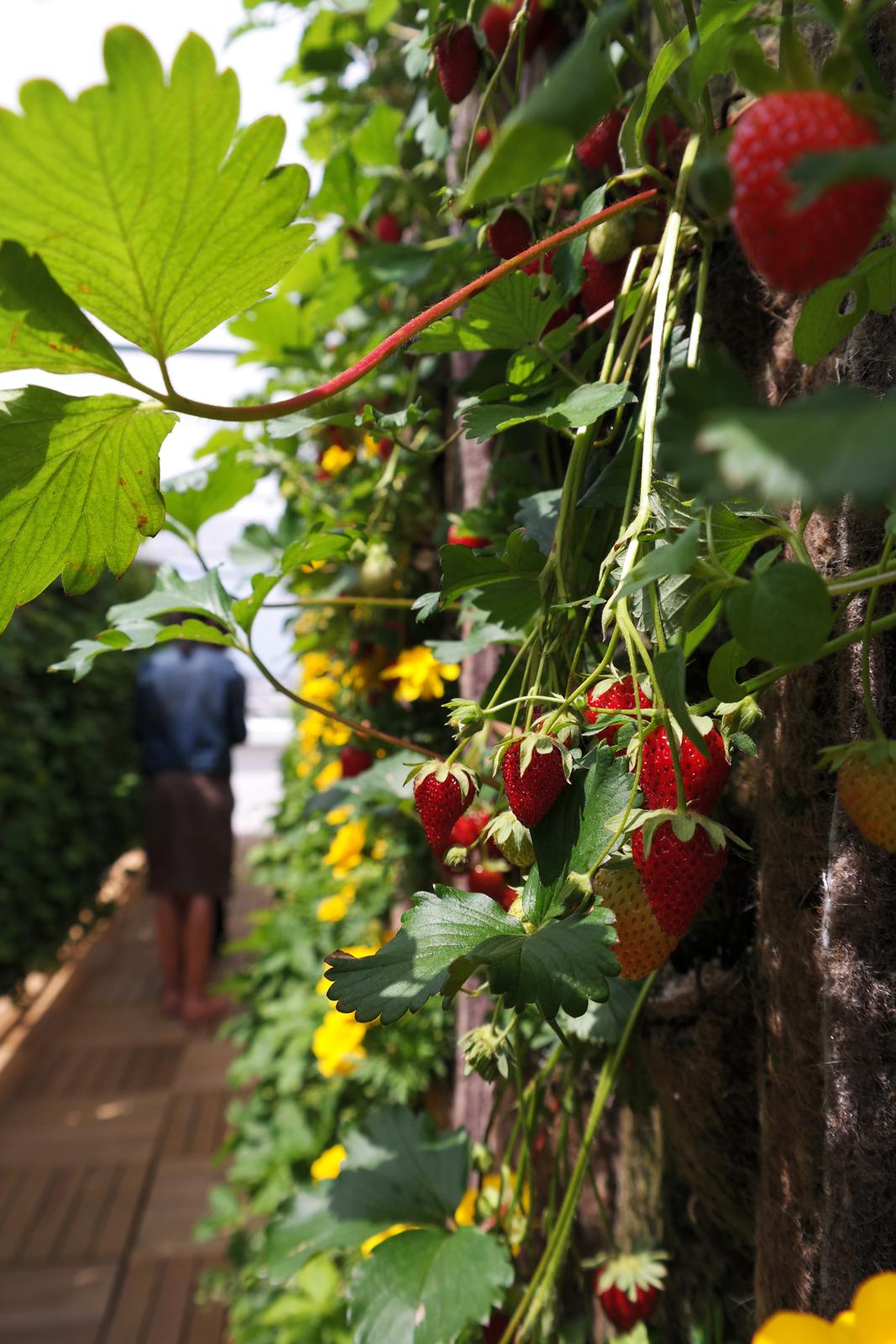 galeries lafayette paris innovation des fraises avec vue sur la tour eiffel. Black Bedroom Furniture Sets. Home Design Ideas