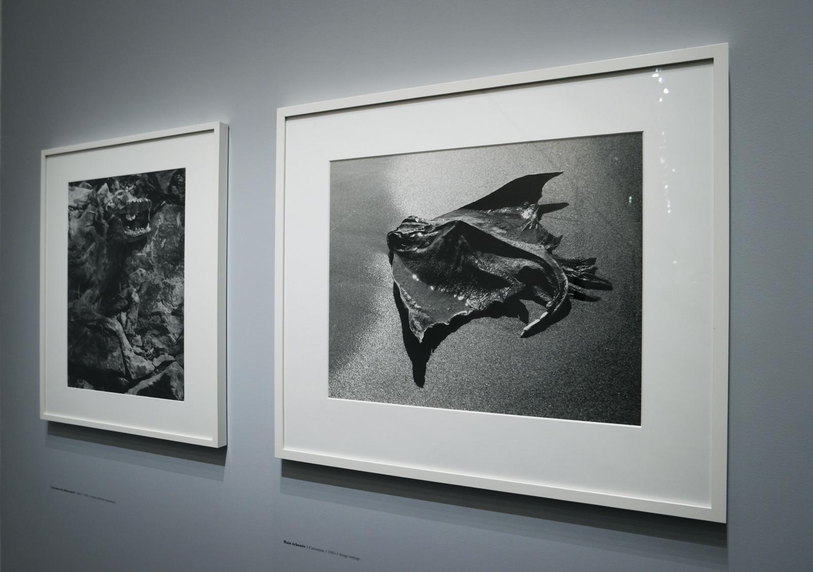 Raie échouée, Camargue, 1965, Lucien Clergue