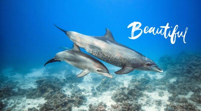 Blue de Disneynature : l'océan éblouissant ! #cinéma