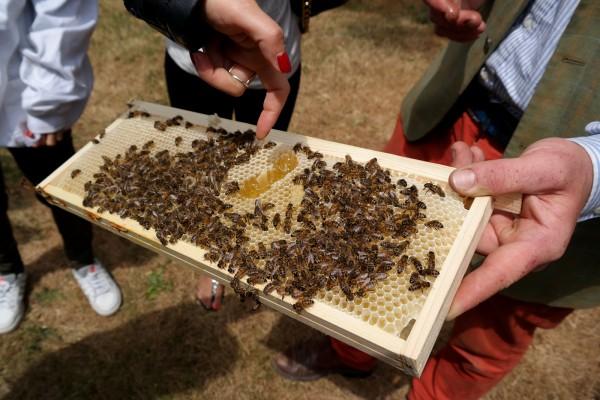 Miel de Paris Audric de Campeau Green Tomato Cars abeilles ruche miel fabrication honey gastronomie bio diversité goût Photo by Blog United States of Paris