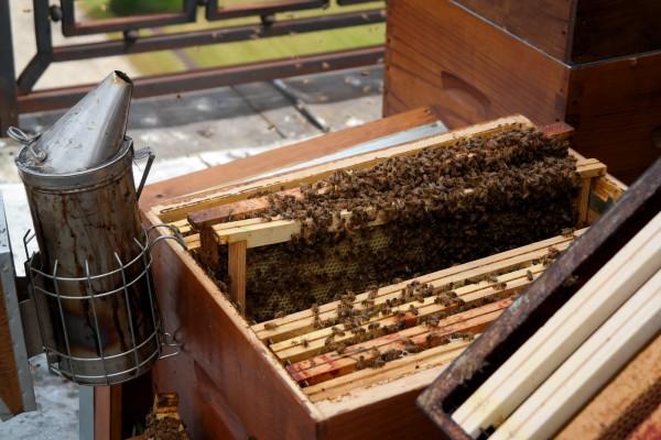 Miel de Paris Audric de Campeau Green Tomato Cars honey fabrication abeilles ruche essaim gastronomie bio diversité goût Photo by Blog United States of Paris