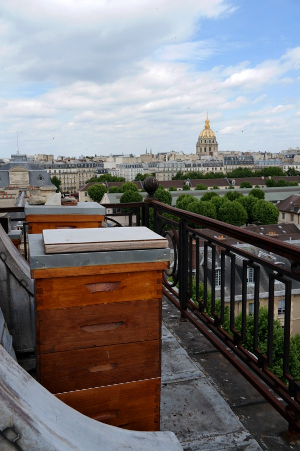 Miel de Paris Audric de Campeau abeilles honey fabrication ruche toit école militaire Hôtel des Invalides gastronomie bio diversité goût Photo by Blog United States of Paris