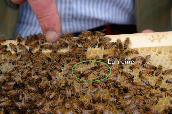 Miel de Paris Audric de Campeau honey Green Tomato Cars abeilles reine ruche contrôle gastronomie bio diversité goût Photo by Blog United States of Paris