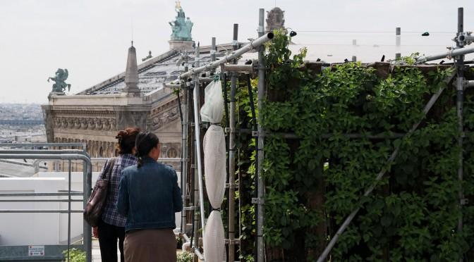 Galeries Lafayette Paris – innovation : des fraises avec vue sur la Tour Eiffel