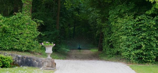abbé Terray expo Château de La Motte Tilly Domaine du chateau versailles histoire art monuments nationaux paon photo by Blog United States of Paris