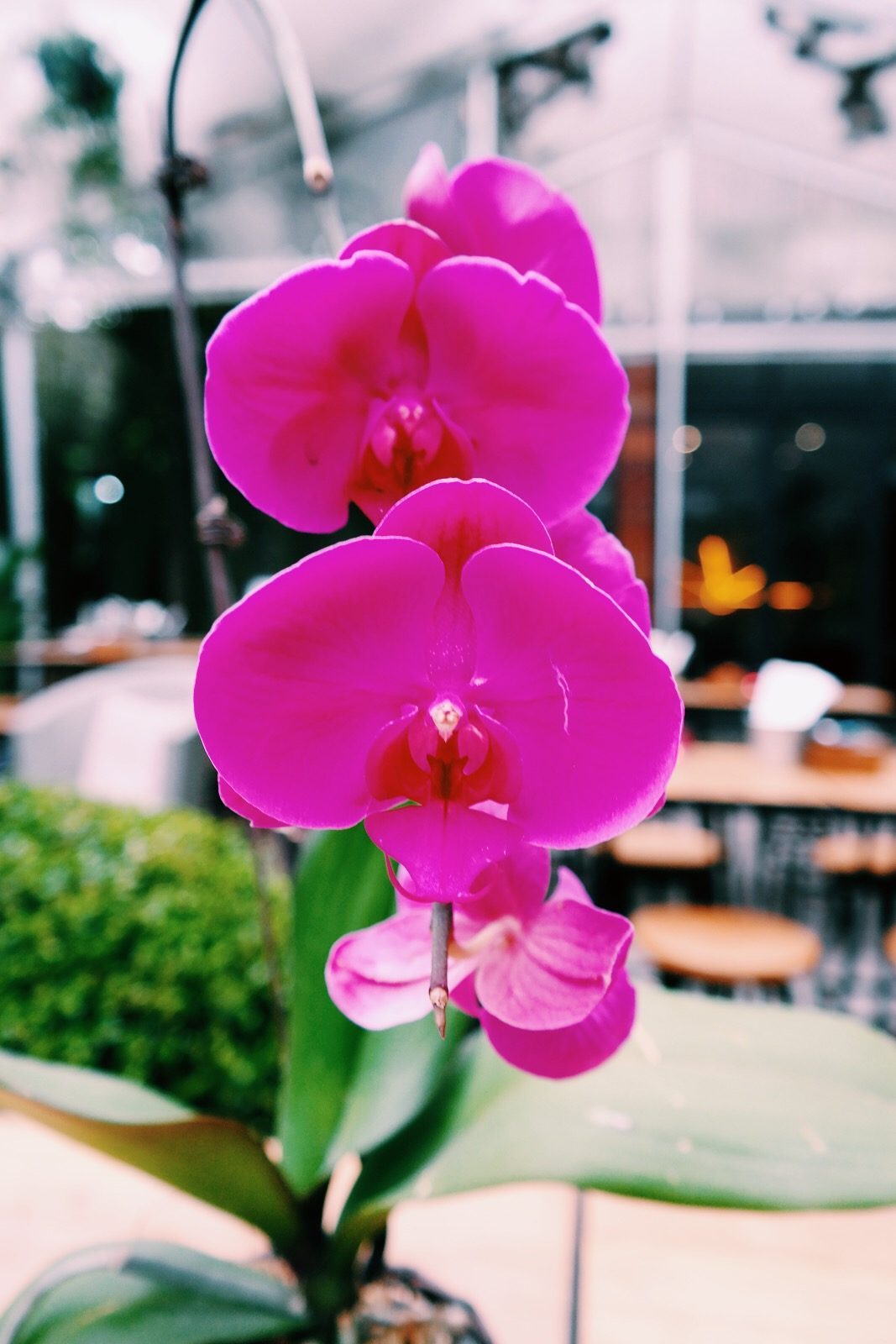 Flower-URBN-Hotel-Shanghai-terrasse-terrace-bar-boutique-hotel-Tempting-Places-Jiaozhou-Rd-Jingan-district-photo-UsofParis-travel-blog