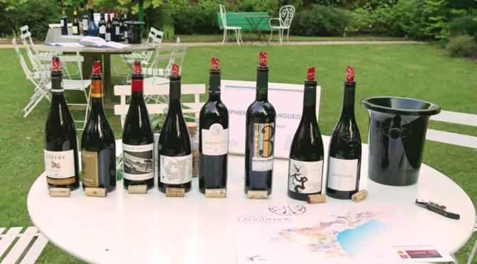 Vins du Languedoc : un terroir surprenant à découvrir